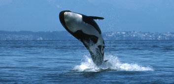 福岡ORCAベンダー会